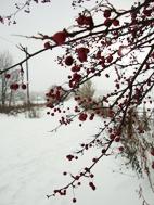 ormiston snow