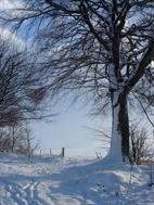 stg winter
