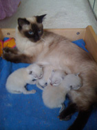 aria kittens